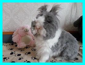 konijn trimmen