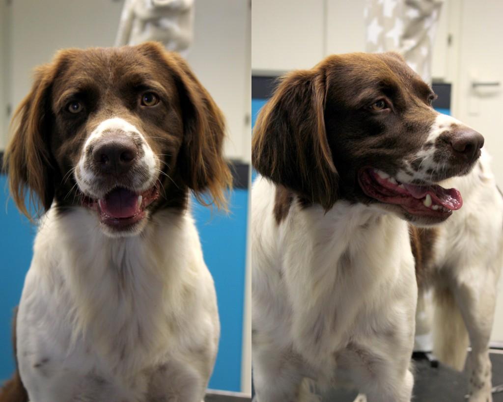 Voor en na foto's nieuw
