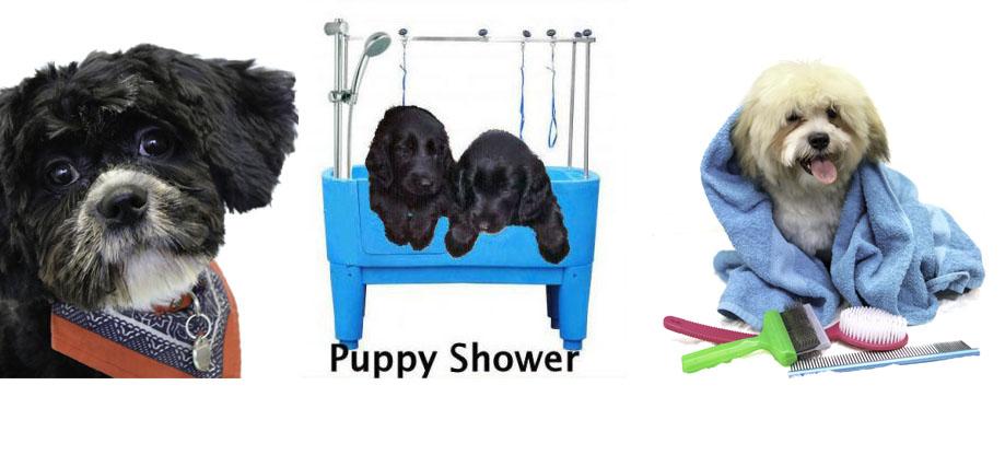 puppy kennismakings actie