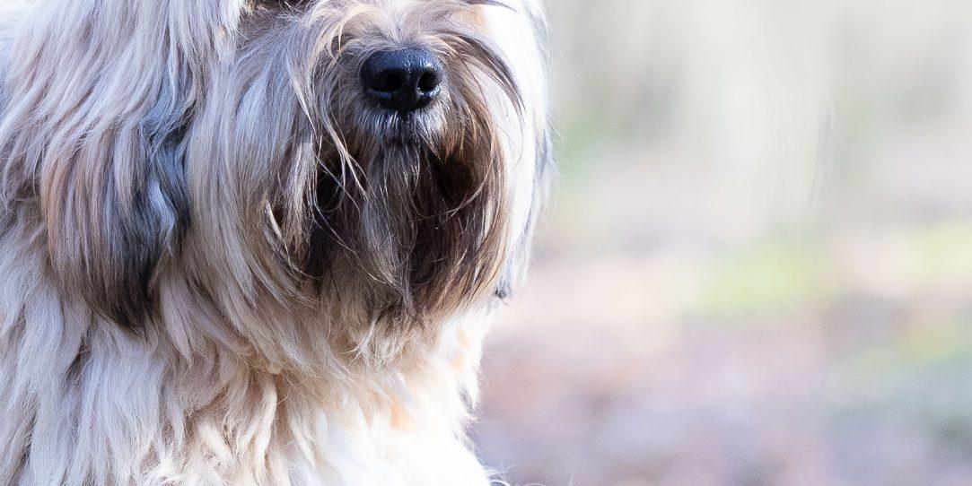 keizer hondenfotografie