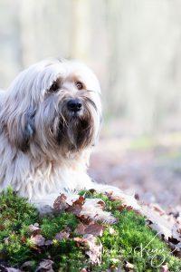 Bericht betreffende grote honden