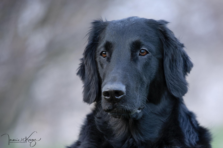 Hoe vaak moet je hond getrimt worden?