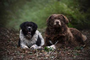 Honden Fotoshoot met Professioneel Hondenfotograaf